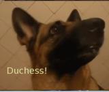 Duchess_title.png