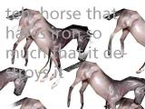 thehorse.jpg